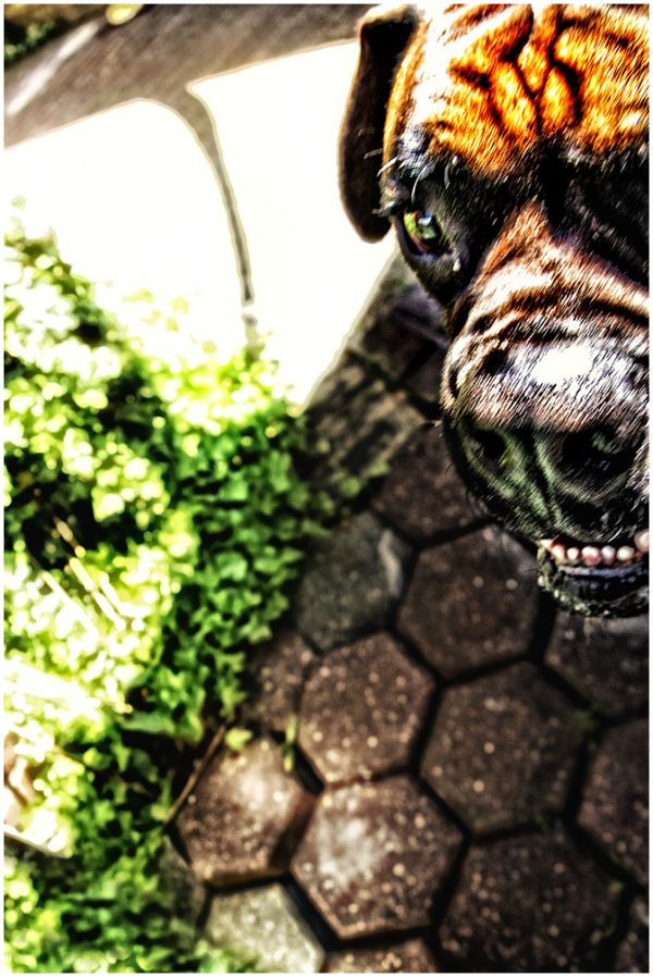 dog encounter