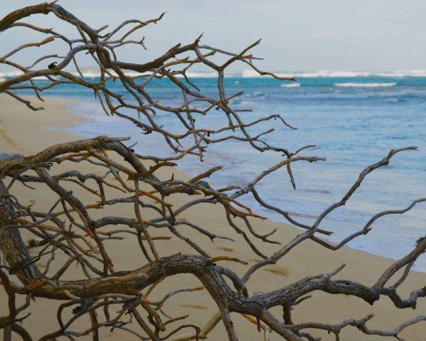 Big Island Branch