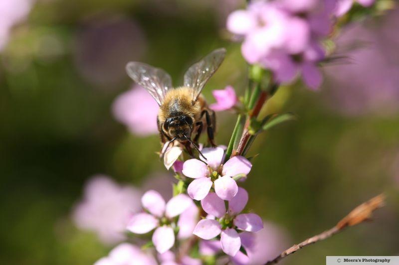 bee again