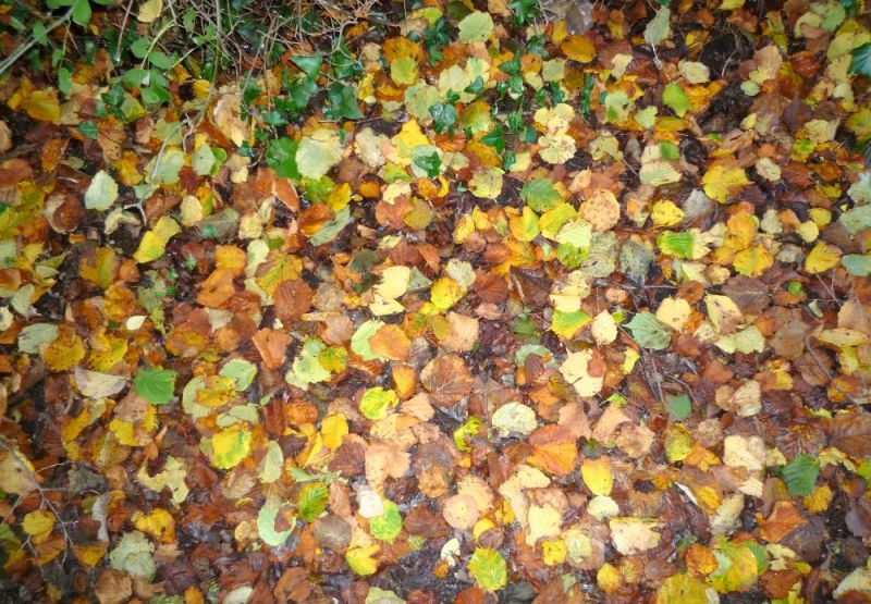 Autumn Leaves in Wales