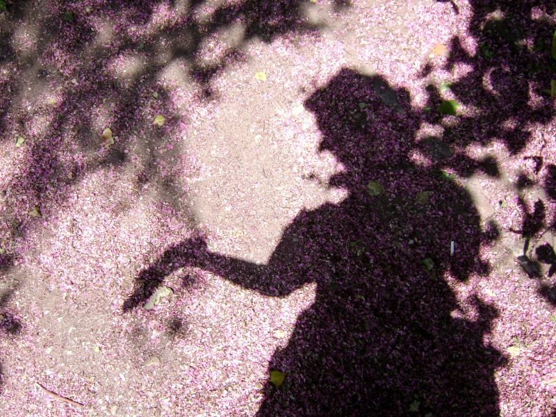 silhouette from Petals