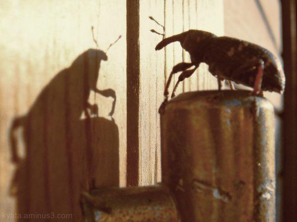 Shadow & Beetle