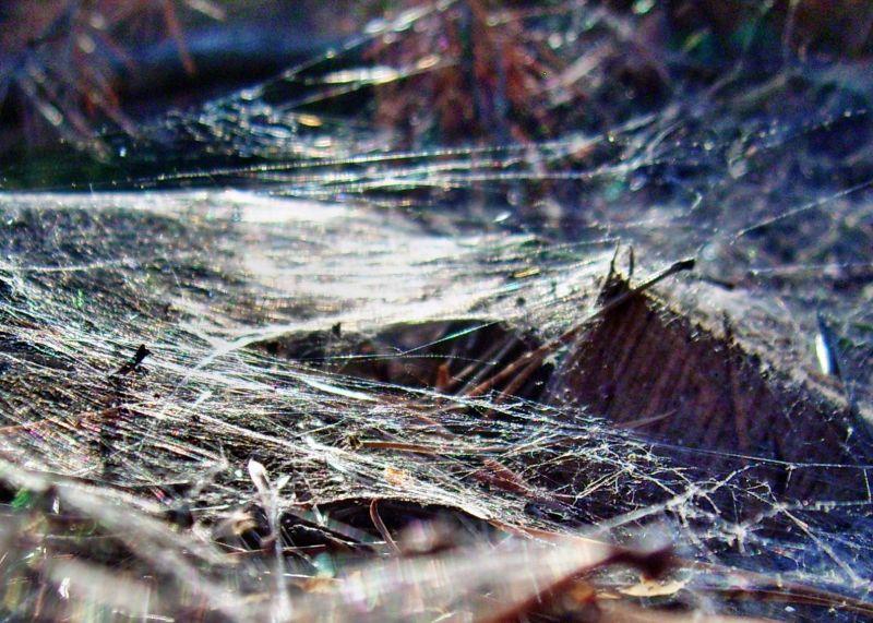 Spiderweb, Dawn