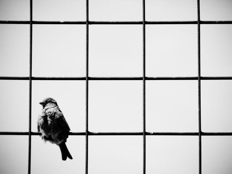 a sparrow on an iron grid