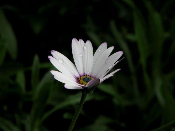 a wet white flower