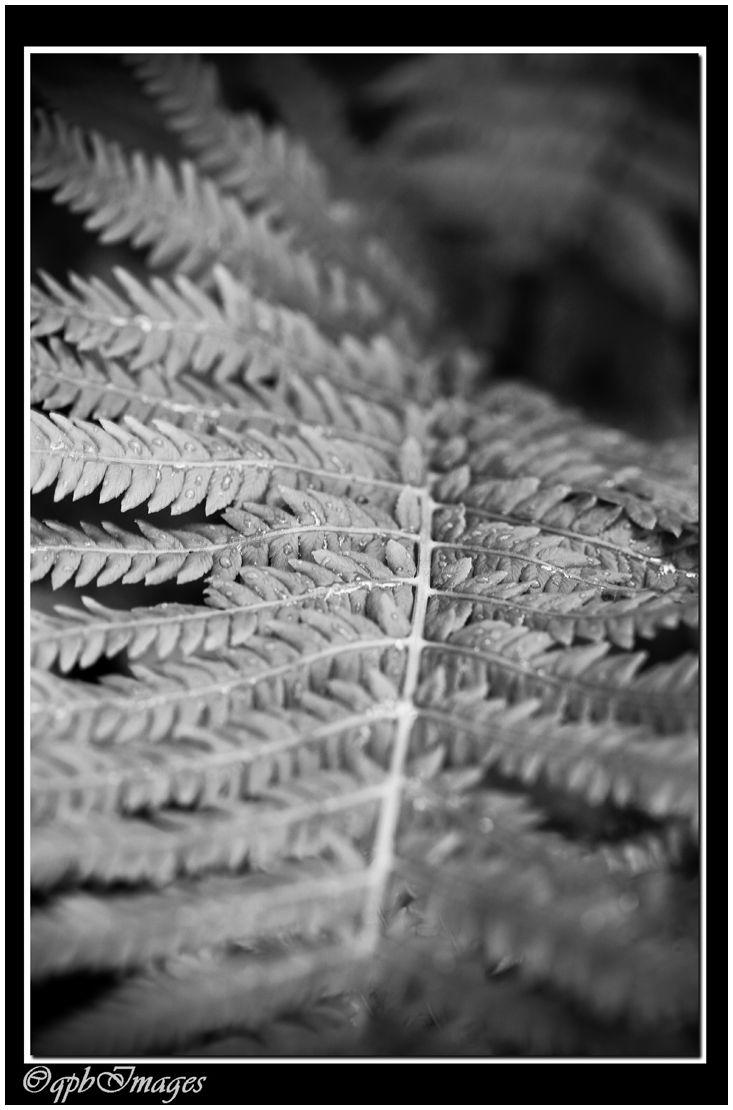 The fern