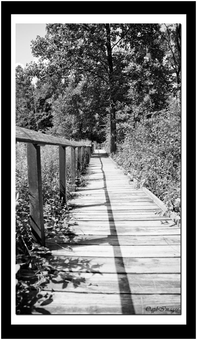 boardwalk, nature walk