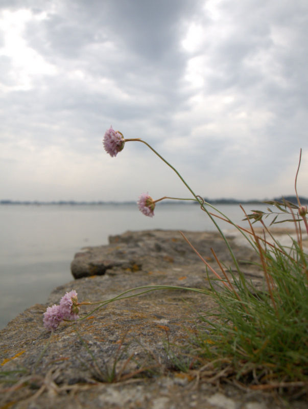 Fleur de mer...