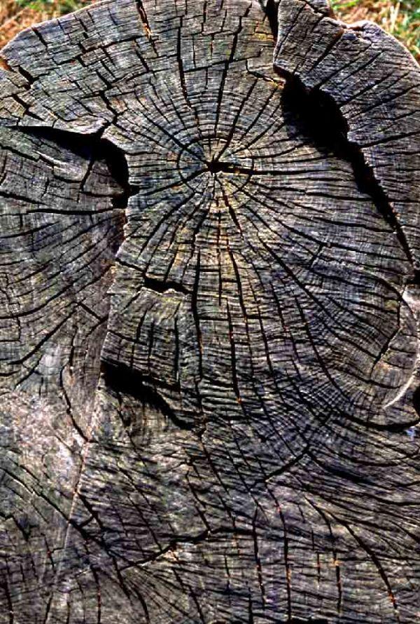 Gueule de bois