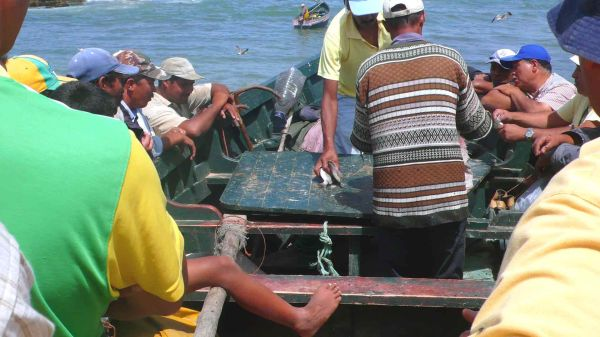Maigre pêche