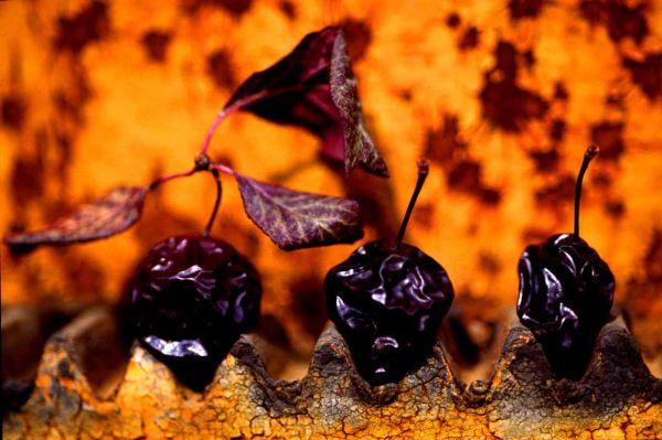 Pour des prunes...