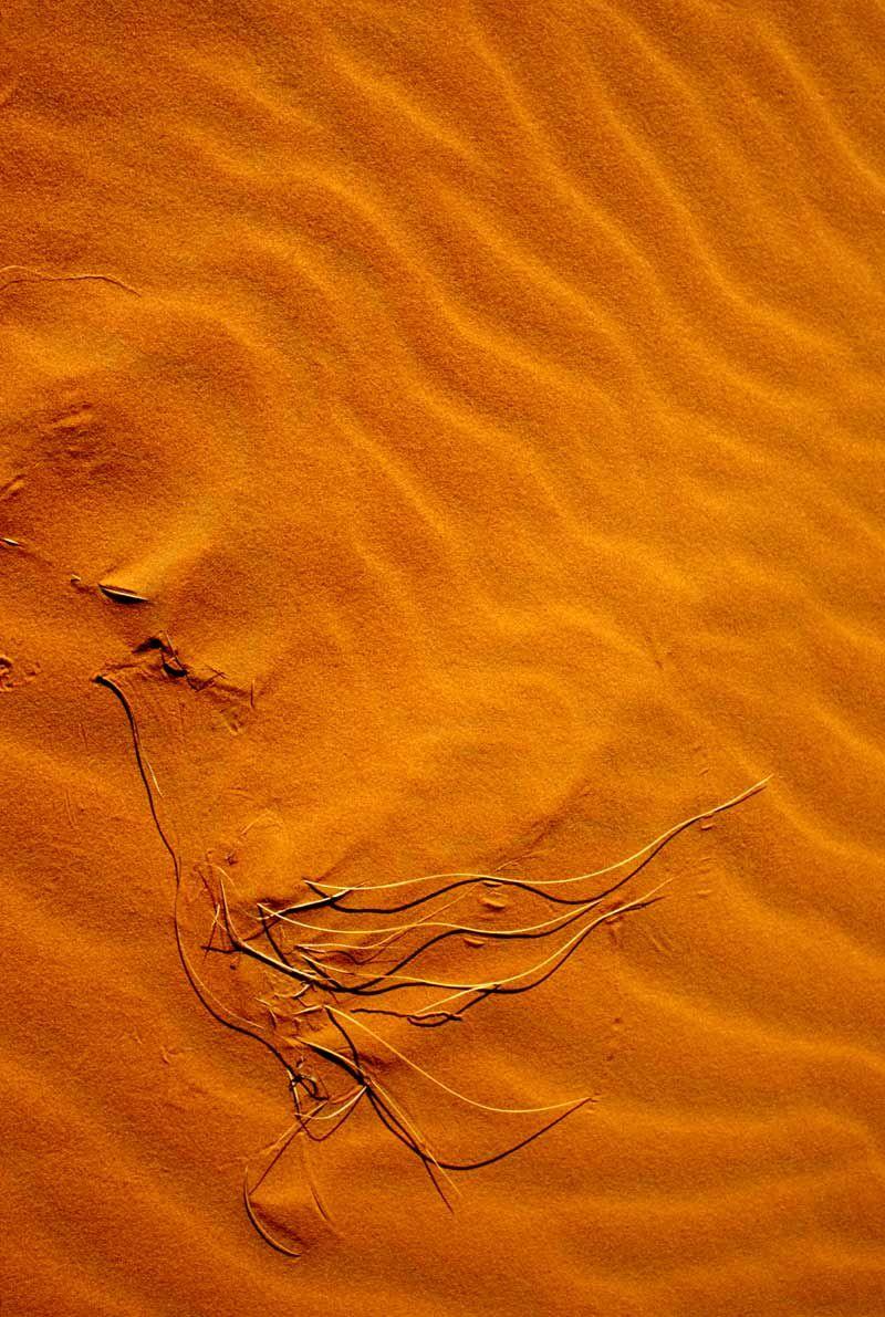 Les ailes du désert