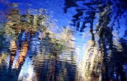 Reflets d'oasis