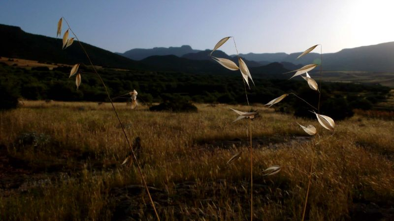 Du point de vue des herbes folles