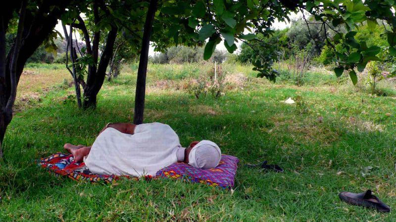 Autre sieste, pas loin de la treille