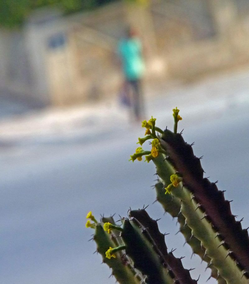Comme un cactus piqué dans sa curiosité  1/62