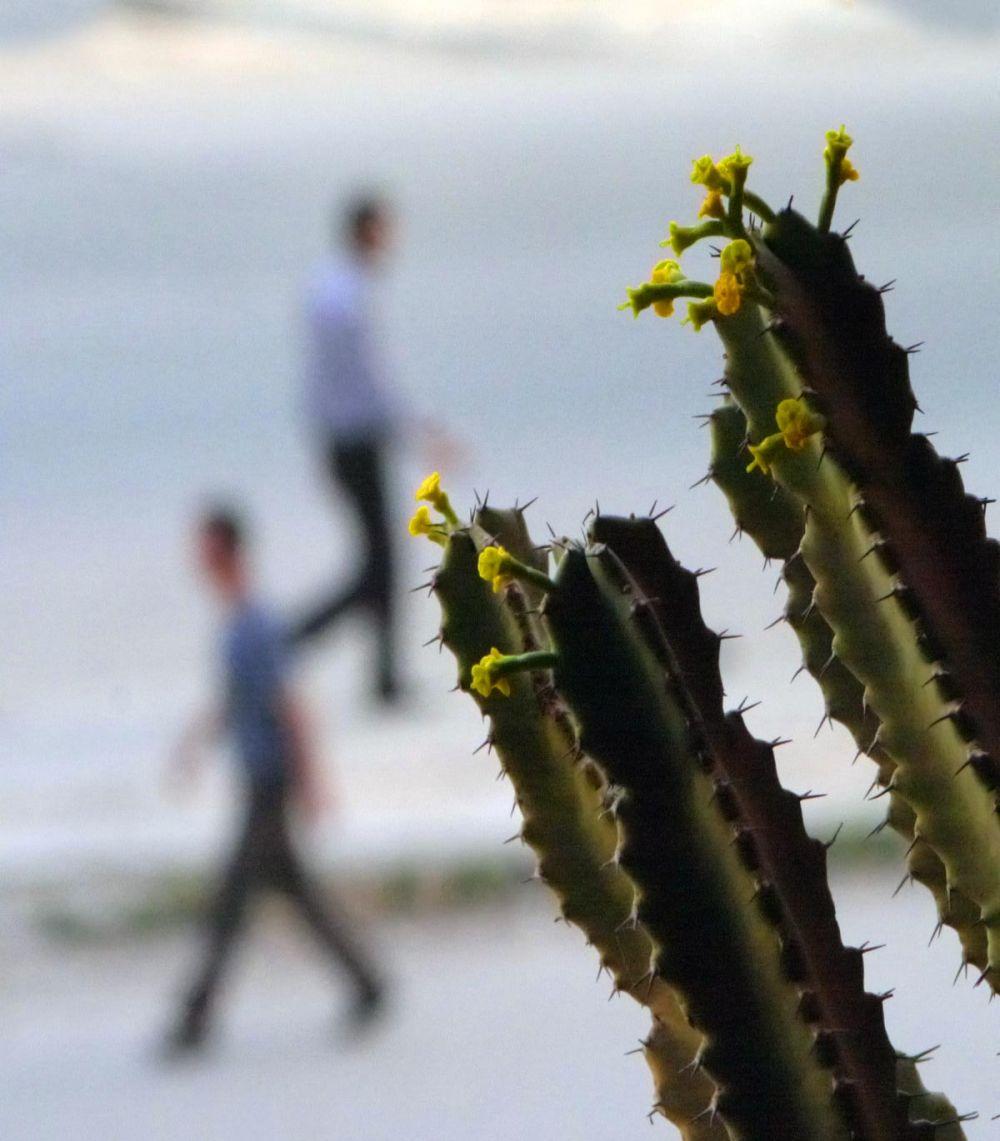 Comme un cactus piqué dans sa curiosité 3
