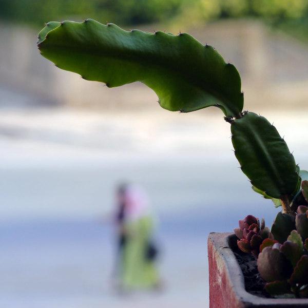 Comme un cactus piqué dans sa curiosité 8