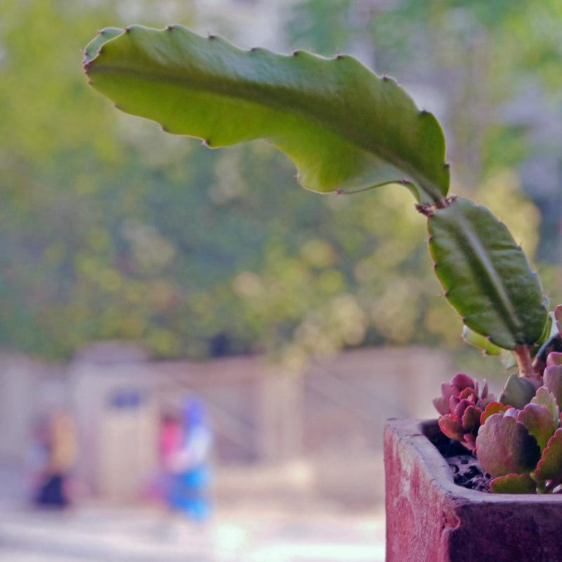 Comme un cactus piqué dans sa curiosité 10