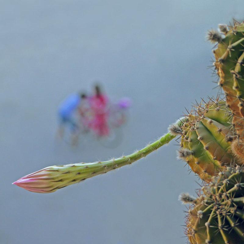 Comme un cactus piqué dans sa curiosité  28
