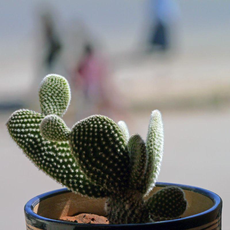 Comme un cactus piqué dans sa curiosité  30