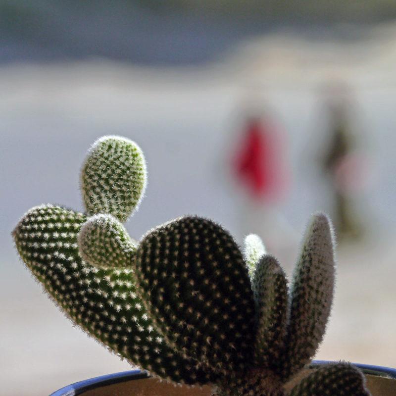 Comme un cactus piqué dans sa curiosité  31
