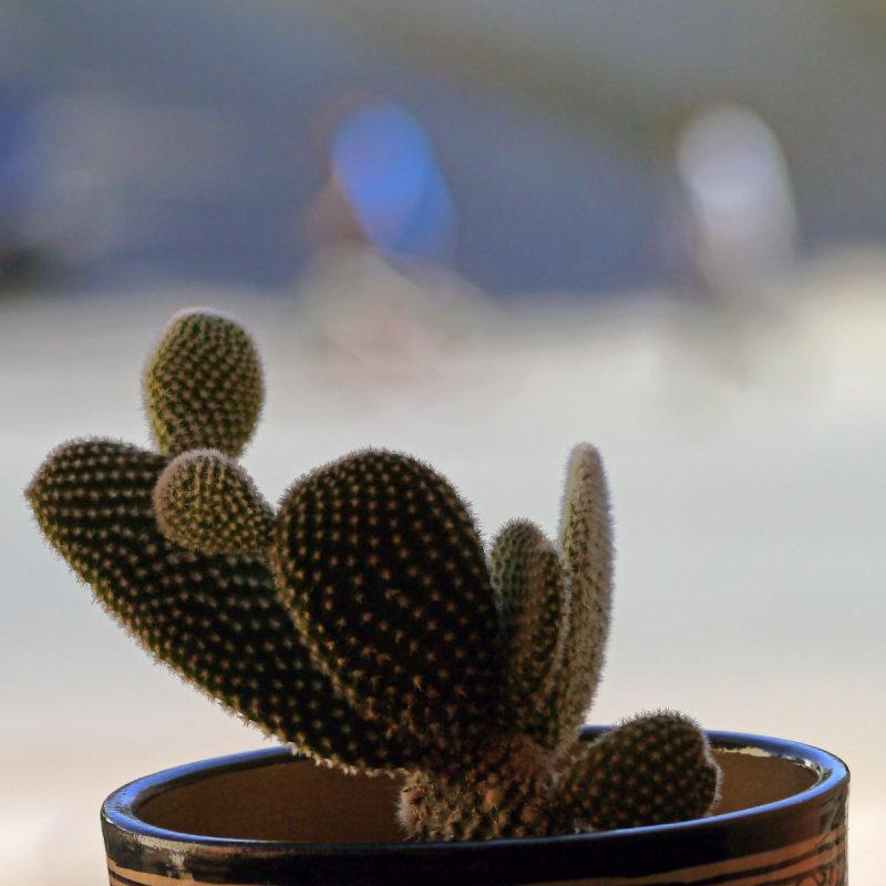 Comme un cactus piqué dans sa curiosité  33