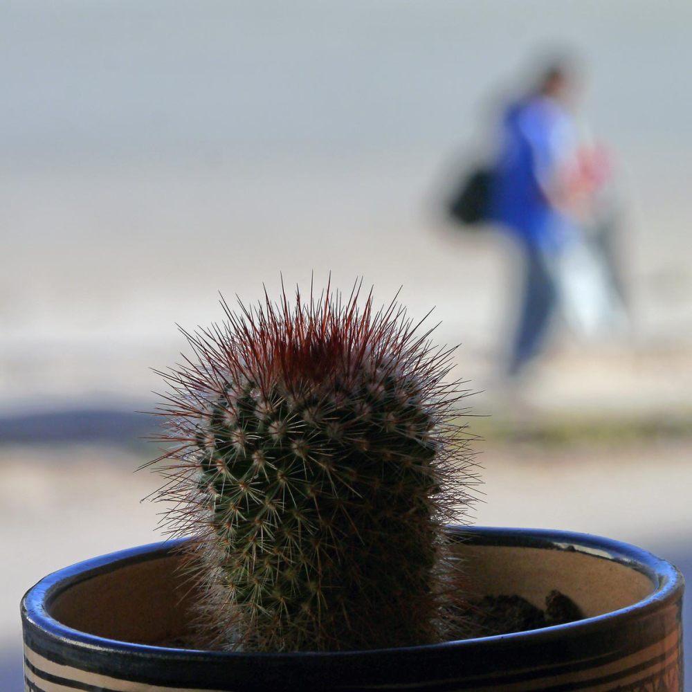 Comme un cactus piqué dans sa curiosité  35