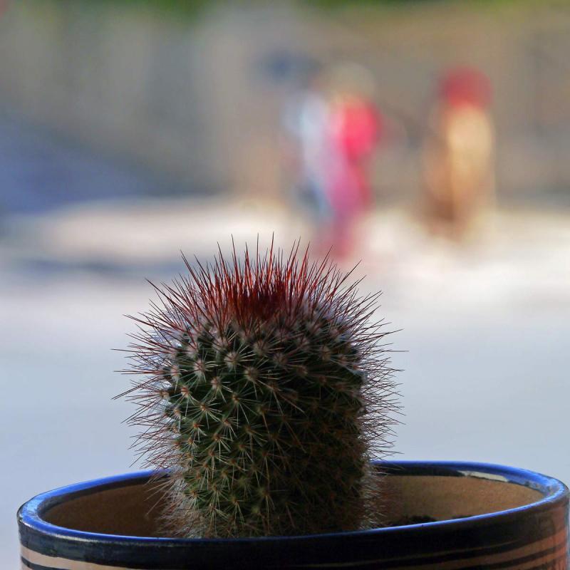 Comme un cactus piqué dans sa curiosité  36