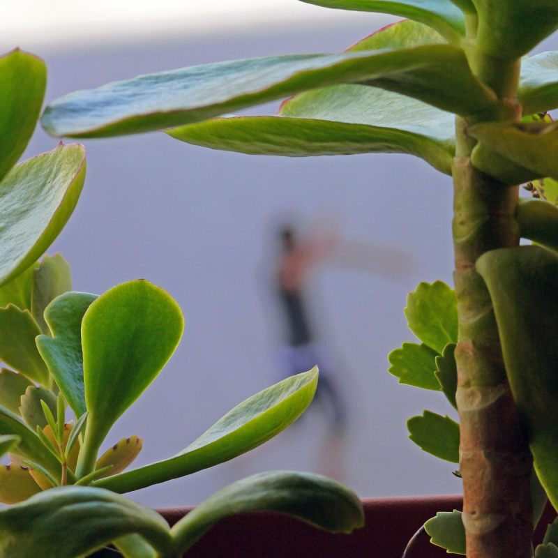 Comme un cactus piqué dans sa curiosité  45