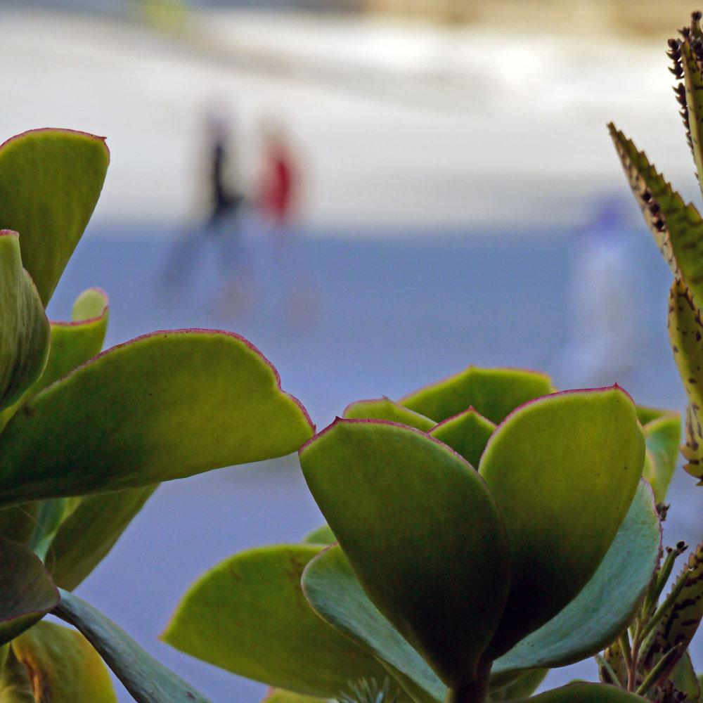 Comme un cactus piqué dans sa curiosité  55