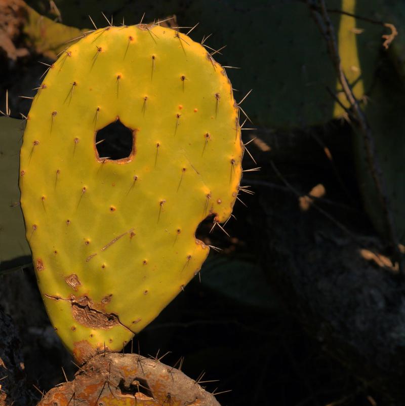 Casse-tête pour un cactus