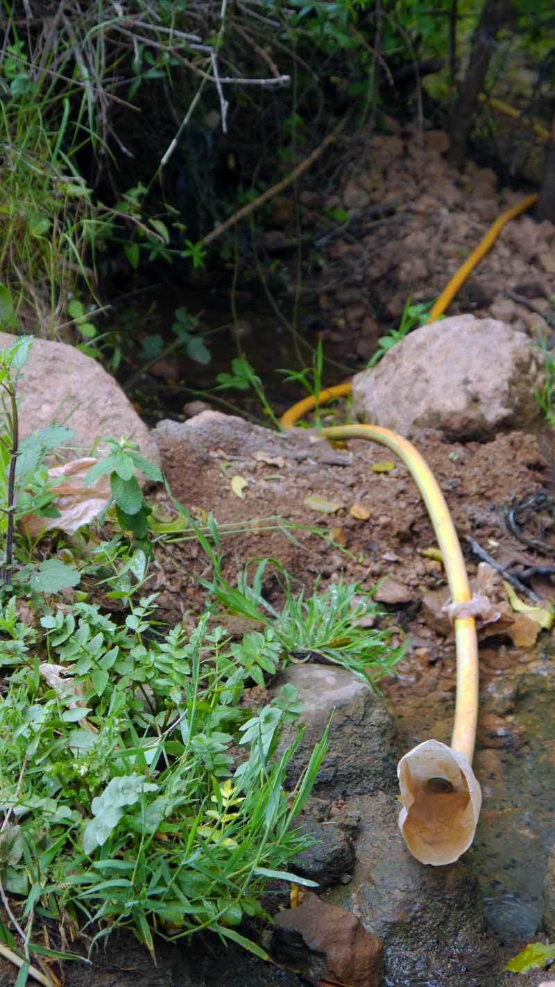 The snake funnel