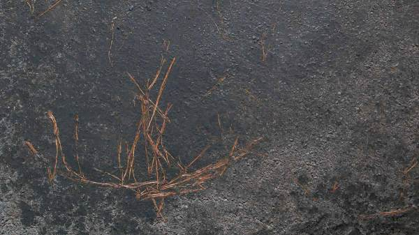 Les naufragés de l'asphalte
