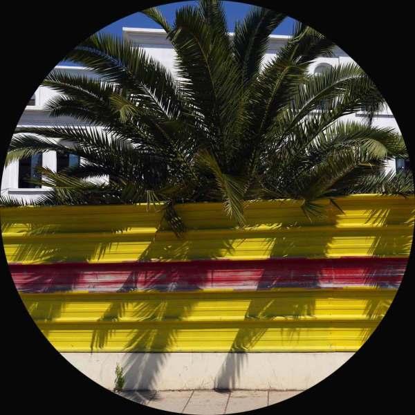 Palmier-palissade