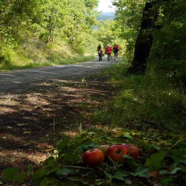 Petites pommes en prose 7