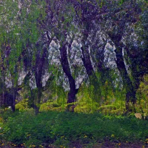 Passage par le parc 4