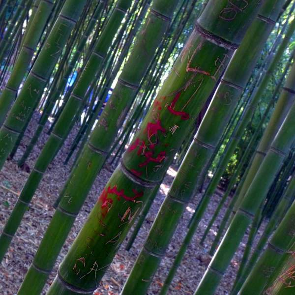 Graffiti sur bambou
