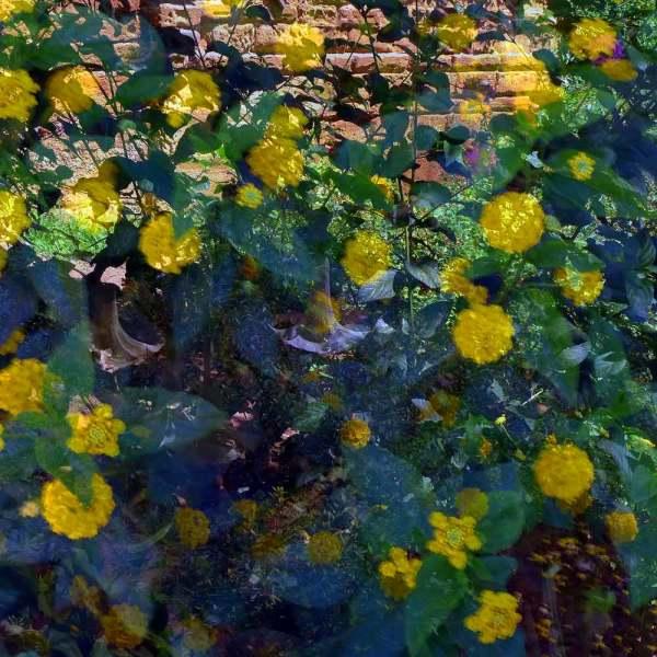 Dans le jardin du Chellah 4