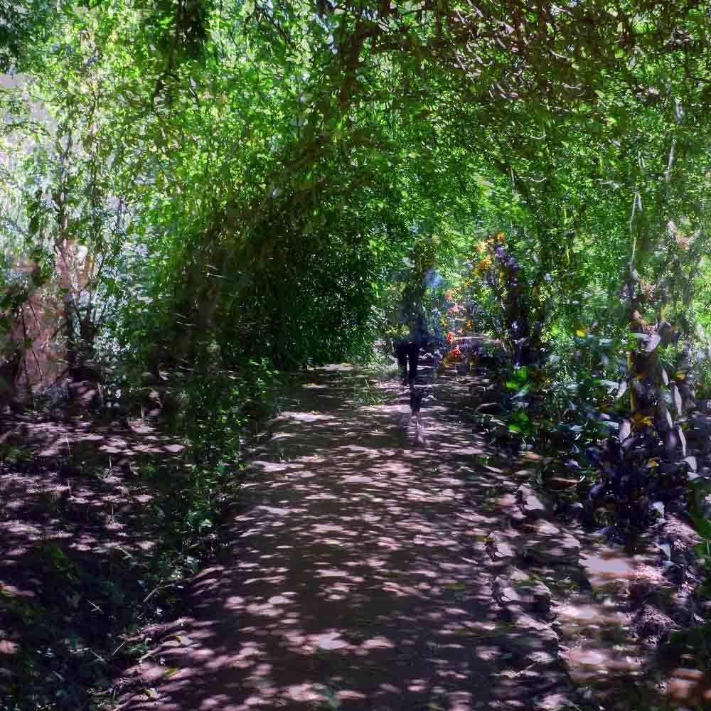 Dans le jardin du Chellah 5