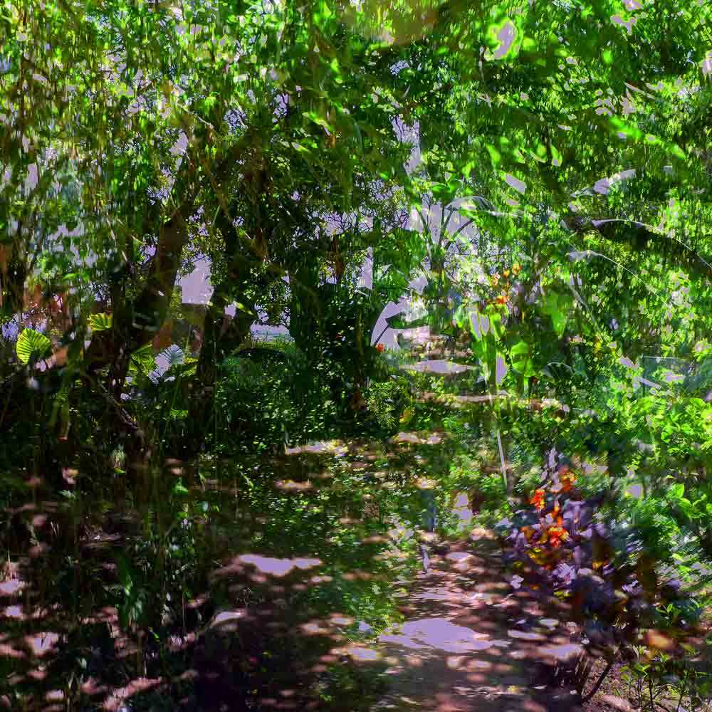 Dans le jardin du Chellah 8