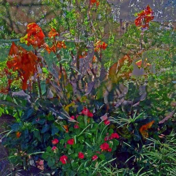Dans le jardin du Chellah 10