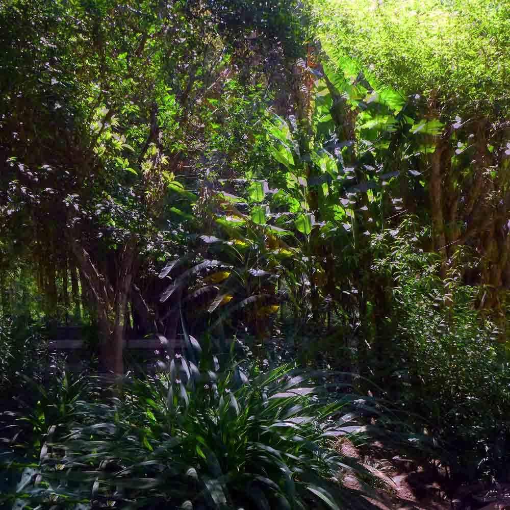 Dans le jardin du Chellah 11