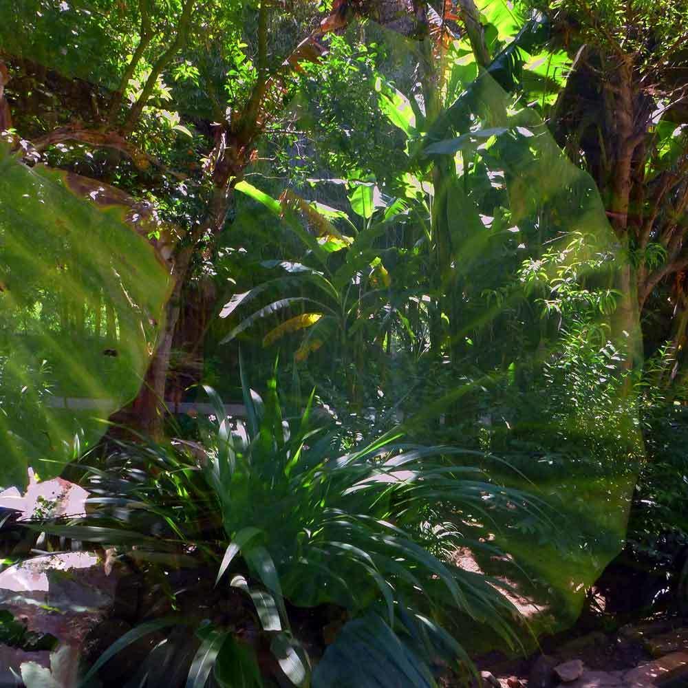 Dans le jardin du Chellah 12