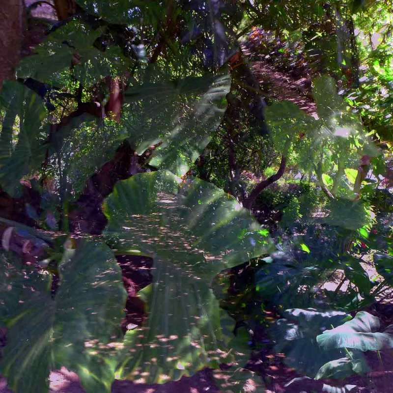 Dans le jardin du Chellah 13