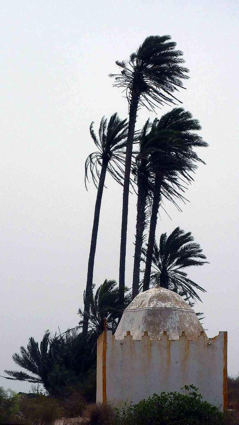 Le marabout aux palmiers
