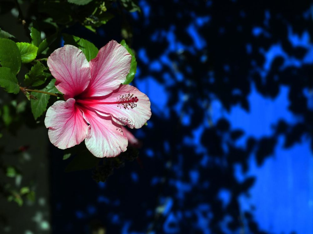 Que fleurisse...