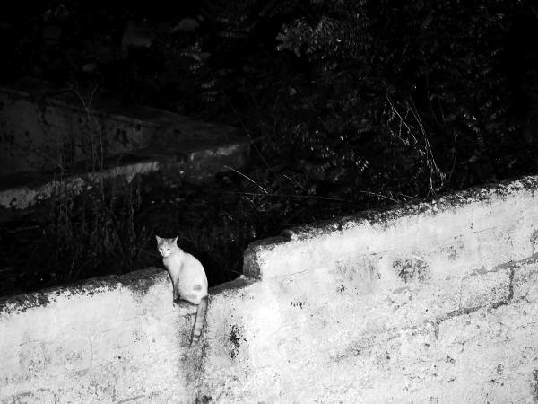 Par pleine lune tous les chats ne sont pas gris