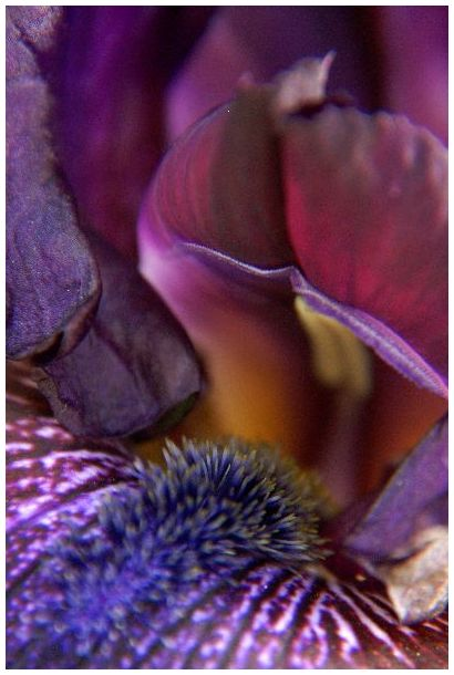 Floral, Flowers, Macro, Garden, Art, Iris