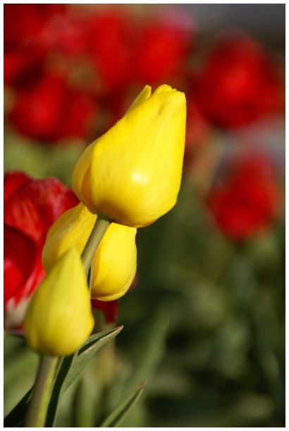 Floral, Flowers, Macro, Garden, Abstract, Art